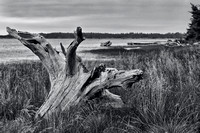 Driftwood and Grasses, Monochrome